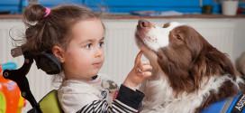 Pestrobazar pomůže vycvičit další asistenční psy